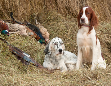 Bird Dog Club
